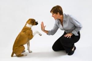 Dog-Training-Technique