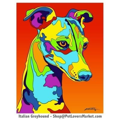 Italian Greyhound Pictures and Greyhound Art for Sale. Greyhound art and dog painting by Michael Vistia.