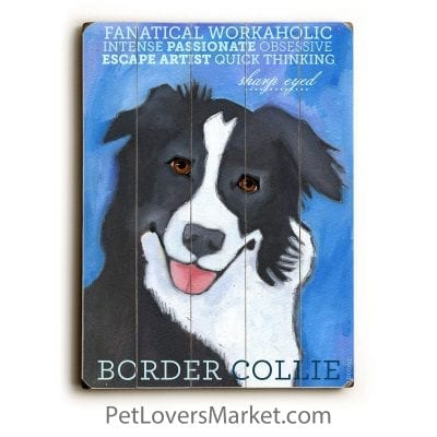 Border Collie: Dog Print on Wood