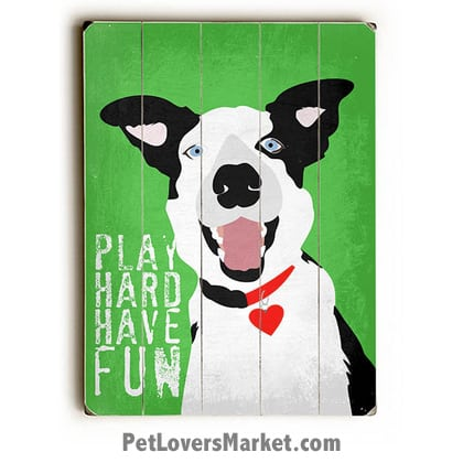 """Play Hard. Have Fun."" Motivational Quote with Border Collie - Dog Picture, Dog Print, Dog Art. Wall Art and Wooden Signs with Dog Pictures and Dog Quotes. Features the Border Collie dog breed."