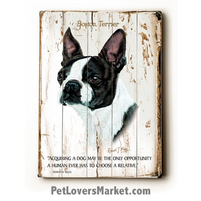 "Boston Terrier: Dog Picture, Dog Print, Dog Art. ""Acquiring a dog may be the only opportunity a human ever has to choose a relative."" ~ dog quote. Wall Art and Wooden Signs with Dog Pictures and Dog Quotes. Features Boston Terrier Dog Breed."