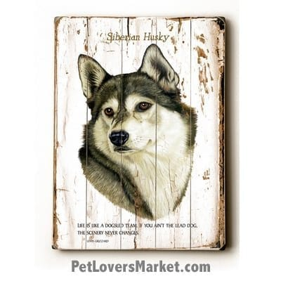 """Siberian Husky - Dog Picture, Dog Print, Dog Art. """"Life is like a dogsled team. If you aint the lead dog, the scenery never changes."""" - Lewis Grizzard (famous dog quotes). Wall Art and Wooden Signs with Dog Pictures and Dog Quotes. Features the Siberian Husky dog breed."""