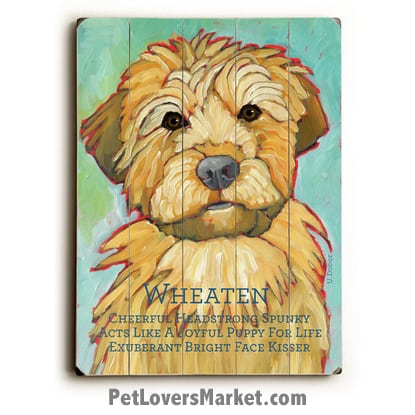 Wheaten - Dog Picture, Dog Print, Dog Art. Wall Art and Wooden Signs with Dog Pictures and Dog Quotes. Features the Weimaraner dog breed.