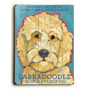 Labradoodle: Dog Breeds Pictures