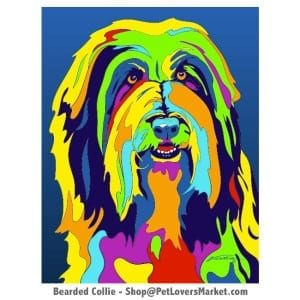 Dog Portraits: Collie art. Dog paintings and dog portraits by Michael Vistia. Collie art is available in canvas prints and matted prints. Bearded Collie dog breed.