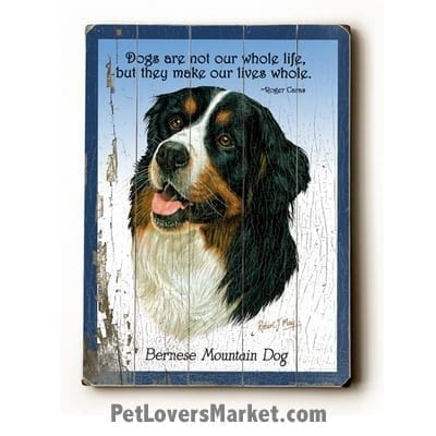 """Bernese Mountain Dog: Dog Picture, Dog Print, Dog Art. """"Dogs are not our whole life, but they make our lives whole."""" ~ dog quote. Wall Art and Wooden Signs with Dog Pictures and Dog Quotes. Features Bernese Mountain Dog Breed."""