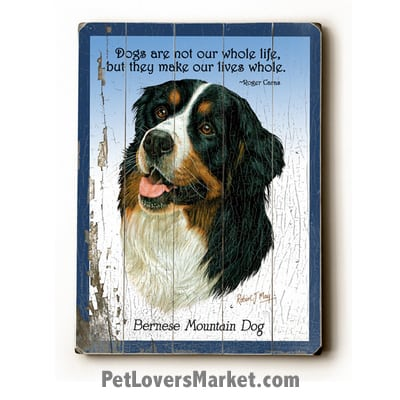 "Bernese Mountain Dog: Dog Picture, Dog Print, Dog Art. ""Dogs are not our whole life, but they make our lives whole."" ~ dog quote. Wall Art and Wooden Signs with Dog Pictures and Dog Quotes. Features Bernese Mountain Dog Breed."