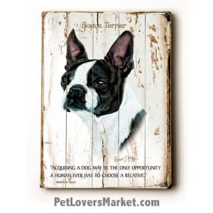 """Dog Painting: Boston Terrier Pictures. Boston Terrier Dog Breed. """"Acquiring a dog may be the only opportunity a human ever has to choose a relative.""""  Dog Print. Dog Art."""