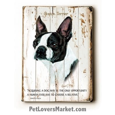 """Boston Terrier: Dog Picture, Dog Print, Dog Art. """"Acquiring a dog may be the only opportunity a human ever has to choose a relative."""" ~ dog quote. Wall Art and Wooden Signs with Dog Pictures and Dog Quotes. Features Boston Terrier Dog Breed."""