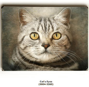 Cat Eyes (Cat Art / Cat Print / Cat Poster)