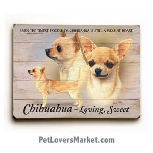 """Dog Painting: Chihuahua Pictures. Dog painting features three chihuahuas with dog quote """"Even the tiniest poodle or chihuahua is still a wolf at heart."""" ~ Dorothy Hinshaw."""