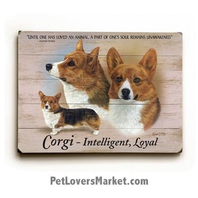 """Corgis: Dog Picture, Dog Print, Dog Art. """"Until one has loved an animal a part of one's soul remains unawakened."""" - Anatole France (famous dog quotes). Wall Art and Wooden Signs with Dog Pictures and Dog Quotes. Features the Welsh Pembroke Corgi Dog Breed."""