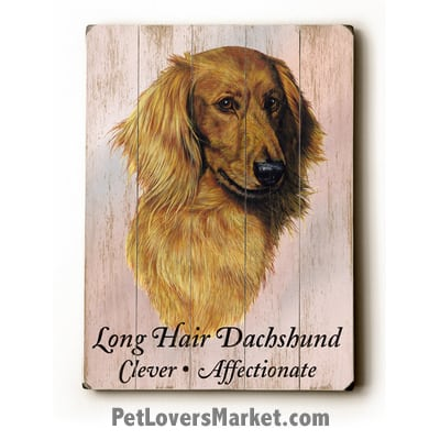 Dachshund (Long Haired): Dog Picture, Dog Print, Dog Art. Wall Art and Wooden Signs with Dog Pictures and Dog Quotes. Features the Dachshund Dog Breed.
