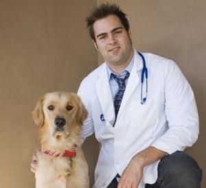 vet and retriever 3