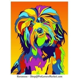 Havanese Pictures & Havanese Art. Havanese Dog Painting by Michael Vistia.