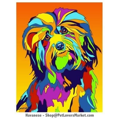 Havanese Pictures & Havanese Art. Havanese Dog Painting by Michael Vistia.