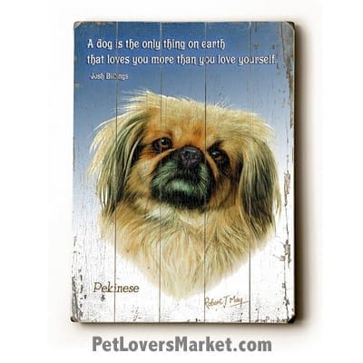 Pekingese - Dog Picture, Dog Print, Dog Art. 'A dog is the only thing on earth that loves you more than he loves himself.' - Josh Billings (famous dog quotes). Wall Art and Wooden Signs with Dog Pictures and Dog Quotes. Features the Pekingese dog breed.
