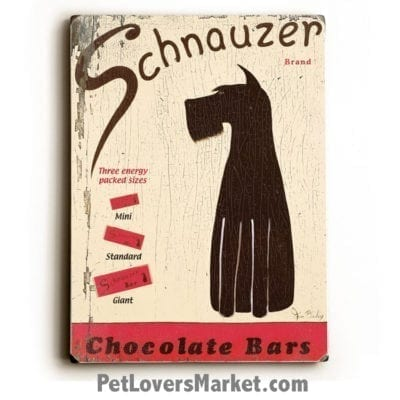 Schnauzer Chocolate Bars Poster