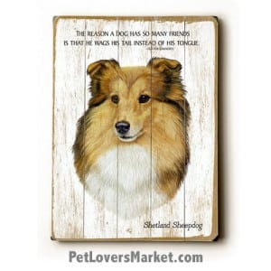 """Shetland Sheepdog - Dog Picture, Dog Print, Dog Art. """"The reason a dog has so many friends is that he wags his tail instead of his tongue."""" (famous dog quotes). Wall Art and Wooden Signs with Dog Pictures and Dog Quotes. Features the Shetland Sheepdog dog breed."""