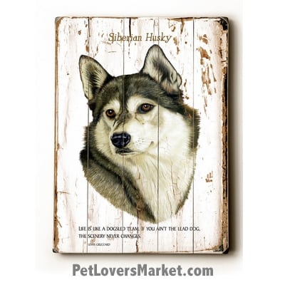 "Siberian Husky - Dog Picture, Dog Print, Dog Art. ""Life is like a dogsled team. If you aint the lead dog, the scenery never changes."" - Lewis Grizzard (famous dog quotes). Wall Art and Wooden Signs with Dog Pictures and Dog Quotes. Features the Siberian Husky dog breed."