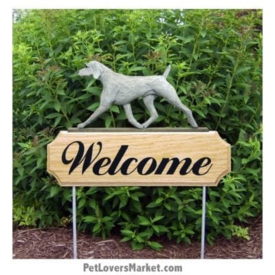 Weimaraner - Dog Picture, Dog Print, Dog Art. Wall Art and Wooden Signs with Dog Pictures and Dog Quotes. Features the Weimaraner dog breed.
