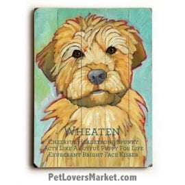 Soft Coated Wheaten Terrier - Dog Picture, Dog Print, Dog Art. Wall Art and Wooden Signs with Dog Pictures and Dog Quotes. Features the Soft Coated Wheaten Terrier dog breed.